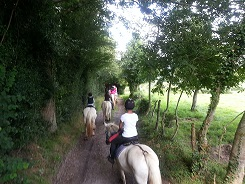 Les chevaux de Marolles